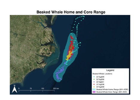 Beaked whale home range and core range