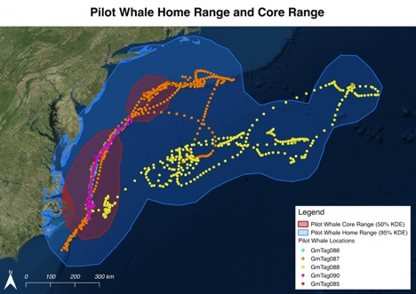 Pilot whale home range and core range